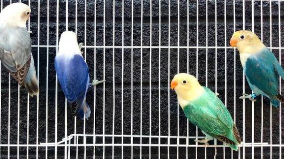 Manfaat Memelihara Burung
