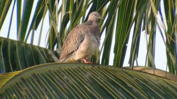 Burung Berkicau dan Naluri Alami Manusia Industri