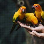 Vitamin Burung