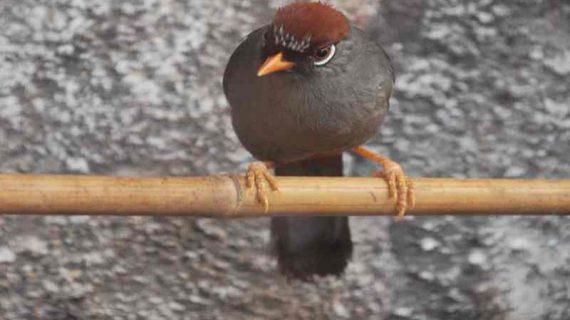 Kebutuhan Protein dan Vitamin pada Burung Peliharaan