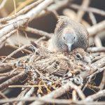 Jenis-Jenis Burung Walet dan Ciri Khasnya