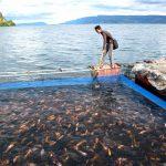 11 Manfaat Usaha Budidaya Ikan Konsumsi