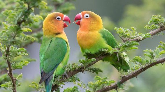 5 Sayuran Segar yang Cocok untuk Lovebird