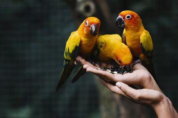 Cara Merawat Burung Pada Saat Musim Hujan